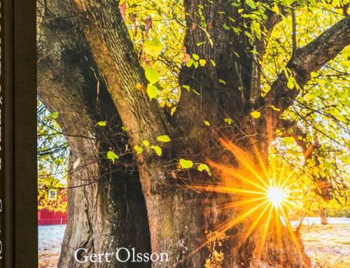 Gert skrev boken Möten med jättar – de stora träden berättar